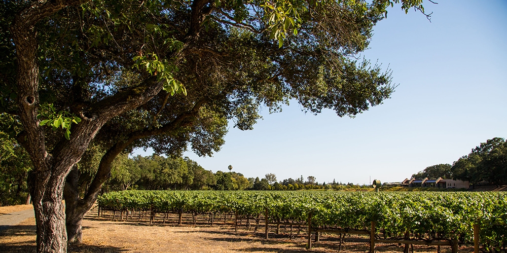 Stag's Leap Wine Cellars, Napa Valley, California