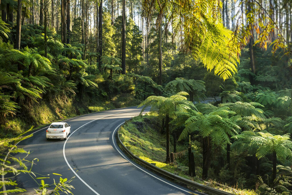 Black Spur Highway for the Adrenaline junkie